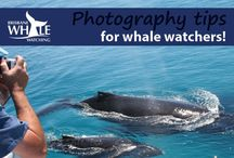 Photography Tips For Whale Watchers / Find more tips on how to make sure you capture your experience when whale watching, click here http://bit.ly/1NZwhRf