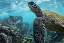 ◇ Animal - marine mammal, other water animals and water living reptiles