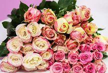 Valentine's Day - Little Waisted™/Bakery Bling™