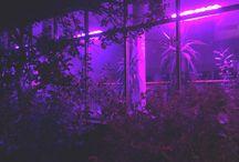 dark neon