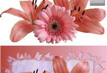 floral photographic quality greeting cards