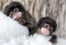 adorable animals / by Katie Fernandez