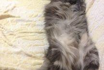 Cat / Lazy cat.