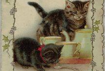 Cat Greetings cards