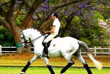 Alquimists / PSL Horse  dressage