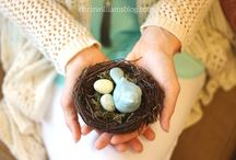 Feathering Your Nest / Christian Blog