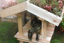 Dog garden