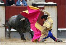 Bullfight / by dcm