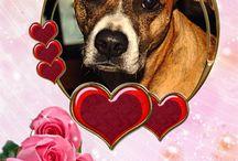 Valentine's Day for Dogs / Dogs celebrating Valentine's Day