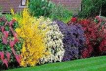 Ogrodnictwo / ogrody