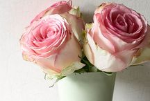 Roses / by Patti Hunter Autullo