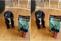 Pet Products and dog info / All about our puppy and pet related products! Opie! Cocker Spaniel born 08.11.14 He likes chasing his tail, squeezing his tennis ball, playing with Ted, taking naps, jumping off the furniture, testing out dog food and tasty treats
