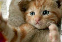 Arrivano i gatti! / Gatti, gattini, cat