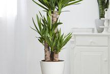 plantes vertes intérieures