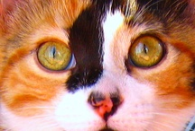 THE BEAUTIFUL CAT / The smallest feline is a masterpiece. ― Leonardo da Vinci / by Linda Tutt