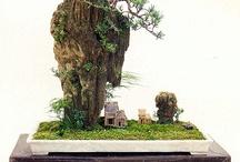 Chinese Penjing / Penjing trees from China, Taiwan and South Korea