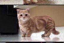 Kitty ♡