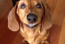 LOVE for wiener dogs!