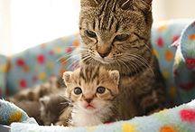 cats / by Mary Bramos