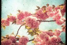 Seasons / by Alyssa Senseney