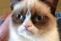Grumpy cat / Grumpy cat is a famous cat, look at some of his stuff to brighten your day