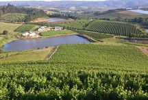 Wallovale Vineyards / The Golden Delicious and Granny Smith orchards have been replaced by plantings of Sauvignon Blanc, Malbec and Pinot Noir, changing the face of the farm entirely.   http://www.go2global.co.za/listing.php?id=2191&name=Wallovale+Vineyards+
