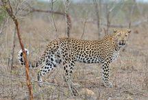 Wildlife / Photographs I have taken in Kruger National Park