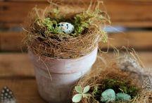 Spring / Spring Decorations