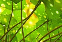 Große Blattpflanzen