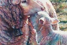 Lam, lamb