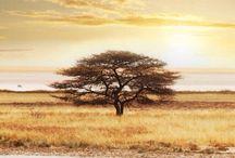 Afrikai utazás