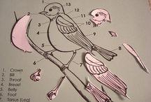 tématické výměny ptáci