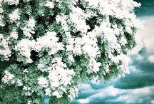 #PhotoArt #snow