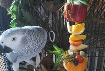 Parrots diet
