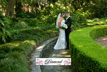 Camellia Gardens wedding photos, Caringbah, Sydney