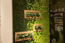 Zelené steny, obrazy