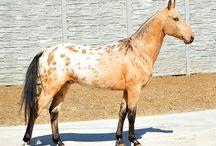Horses, horses and more horses