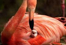 Flamingo / Flamingo birds / by Nancy Nipper