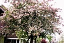 Tuin, bloesem, kleur en meer
