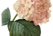 Fleurs * Flowers A imprimer, coudre, bricoler...