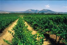 Wine Country / by Israel