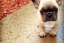 how cute!♡ Bulldog's