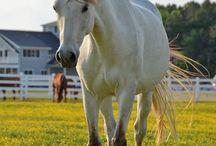 Kôň / Kone / Horse / Horses