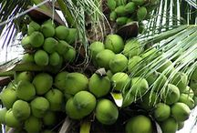Indonesia Coconut Oil / CV.Samani Wholesale Various High Quality Indonesia Coconut Oil Products