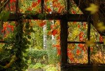 緑に埋もれる温室