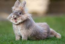 Bunny's :-)