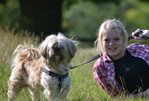Websites / A few of our websites offering IT support, web design and home from home dog boarding