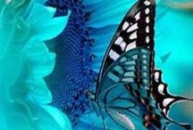 Butterflies / I Love Butterflies they make me happy!