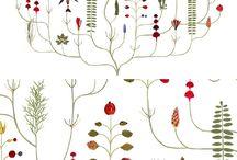 kasvikuvasto