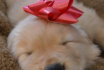 Puppy Love / by Samantha Hendrix
